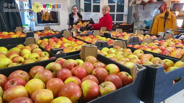 Alma, gyümölcs - családok támogatása